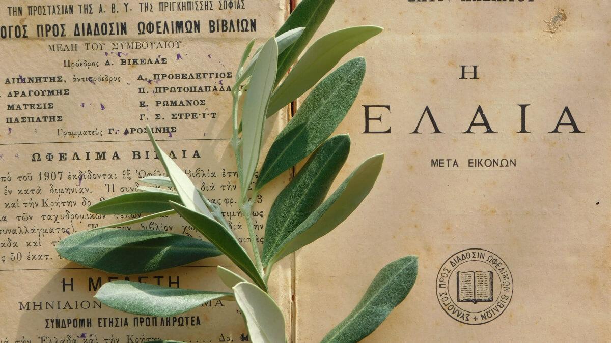 Recept på pesto med oliver och cashewnötter